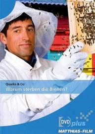 Quarks & Co.: Warum sterben die Bienen? (DVDplus)